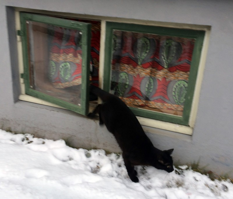 Cat door-window