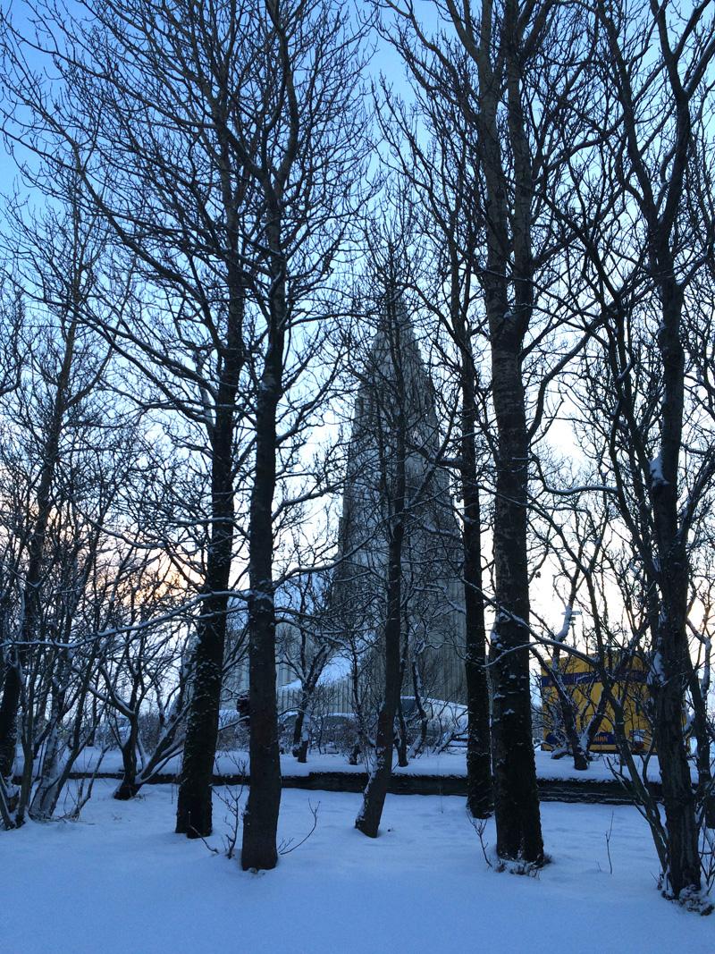 Hallg trees dusk